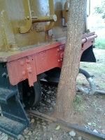 tree nestled against railcar